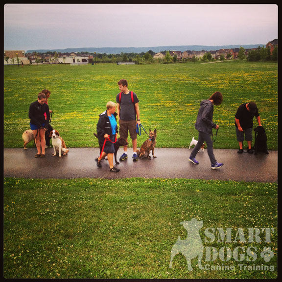 smart dogs canine training group classes