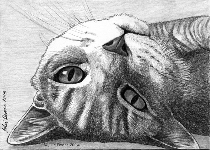 pencil pet portrait cat